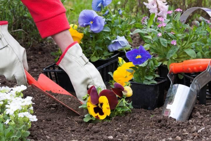 Врамках весеннего благоустройства в столицеРФ начинают высаживать цветы